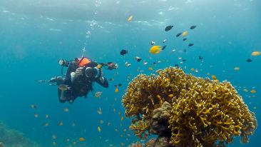 Underwater in Andaman Sea