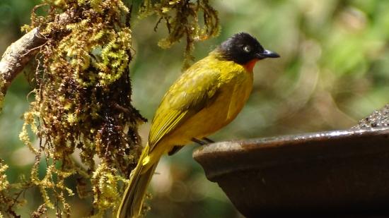 Birds In Coorg, Amanvana Resort Spa, Best resort in Coorg