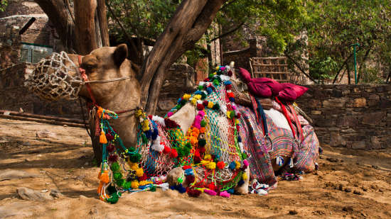 Neemrana Fort-Palace - 15th Century, Delhi-Jaipur Highway Neemrana Camel Ride Neemrana Fort-Palace Alwar Rajasthan