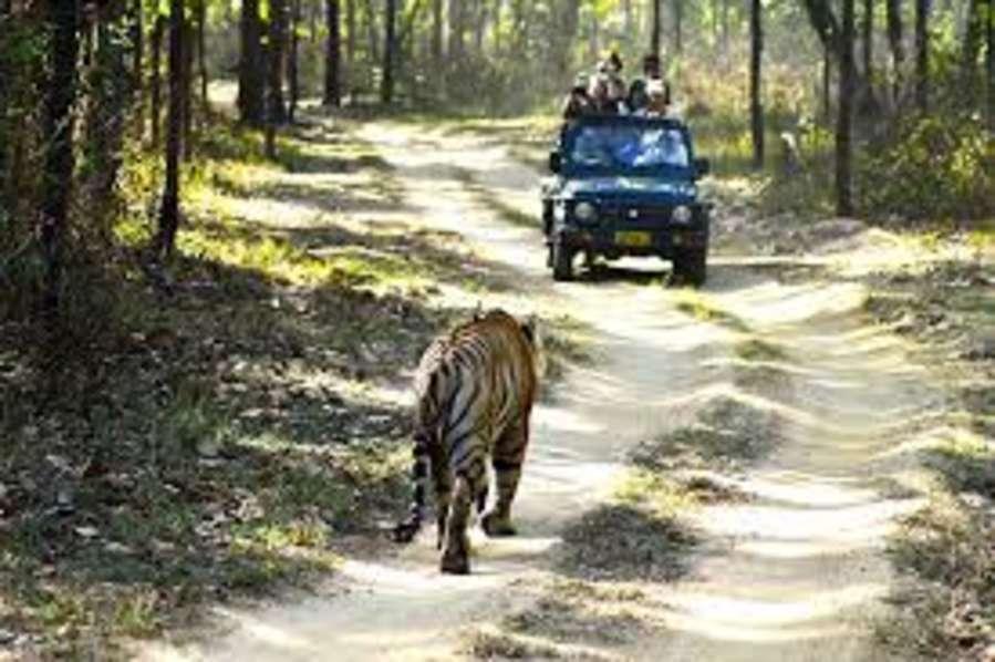alt-text Jungle Safari