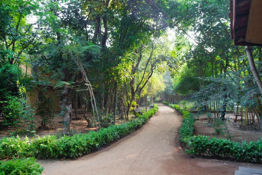 alt-text Rosa Bandhavgarh Meadows, Bandhavgarh Jungle Lodge, Bandhavgarh Resort 2