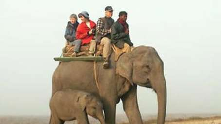 Tiger Camp Resort, Corbett Uttarakhand Elephant Safari Corbett3