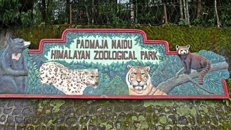 Padmaja Naidu Himalayan Zoological Park Darjeeling