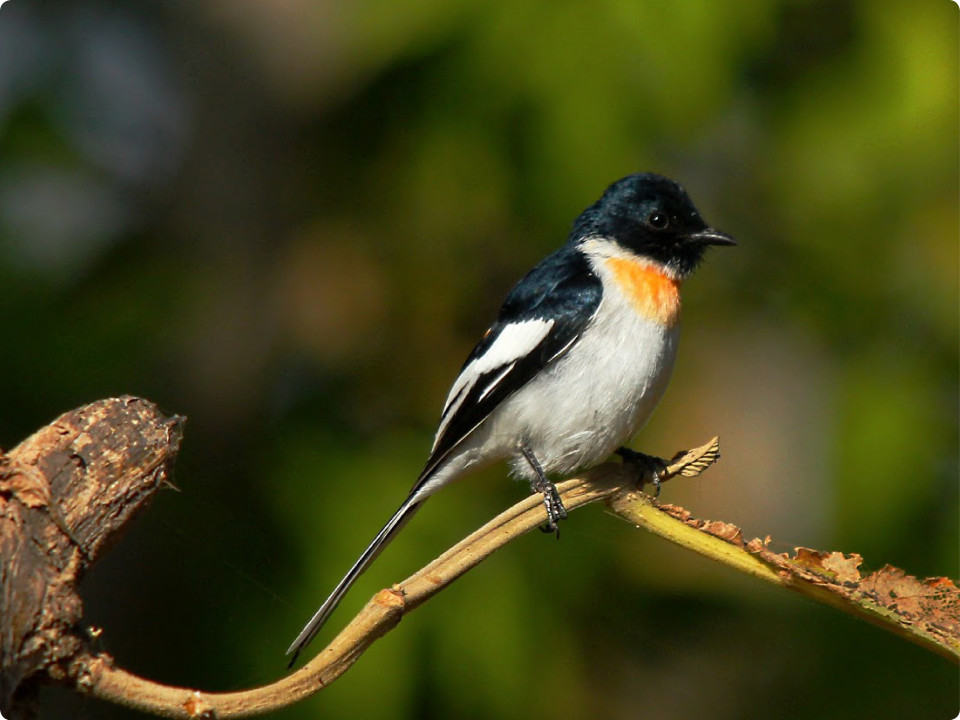 Bandipur bird trails
