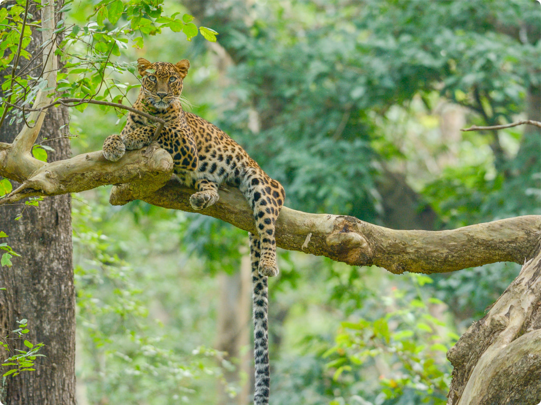 Jungle Safari In Kabini, The Serai Kabini, Resorts in Kabini, Waterfront Resorts in Kabini