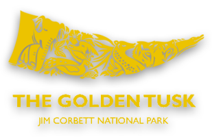 Logo at The Golden Tusk in Ramnagar Near Jim Corbett National Park