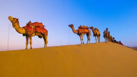 CAMEL DESERT RIDE