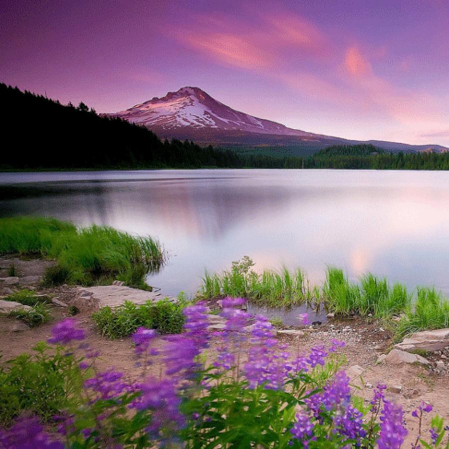 Wular-Lake-7