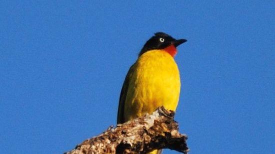 Bird Watching, Activities around Bungalow On The Beach Tranquebar, Hotel In Tamil Nadu