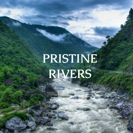 The Bungalows  pristine rivers