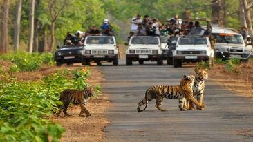 rajaji-national-park-banner5