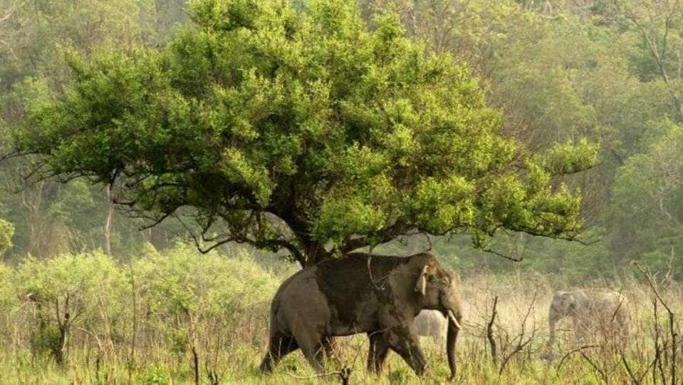 Safari at Rajaji National Park  Aloha On the Ganges Rishikesh Resort and Hotel Rishikesh
