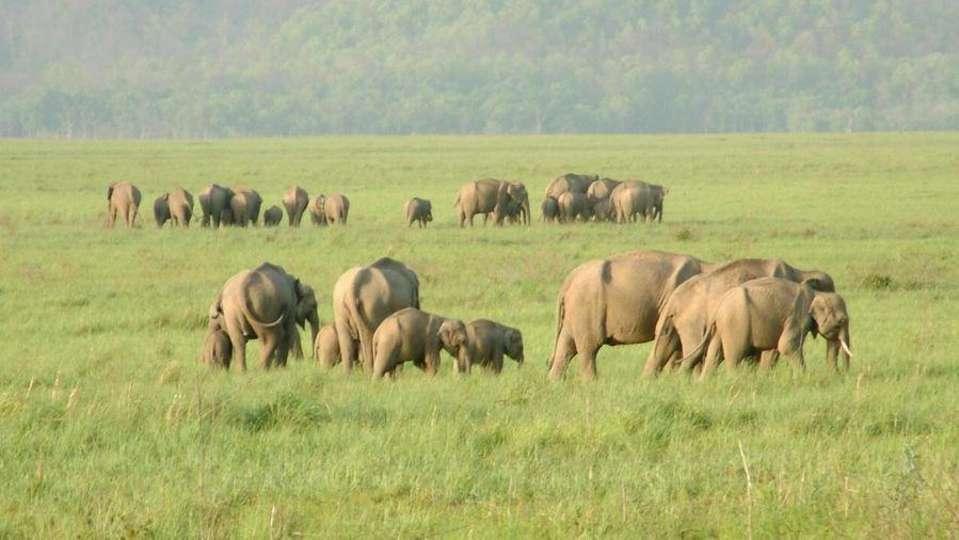Safari at Rajaji National Park near Aloha On the Ganges Rishikesh Resort and Hotel Rishikesh