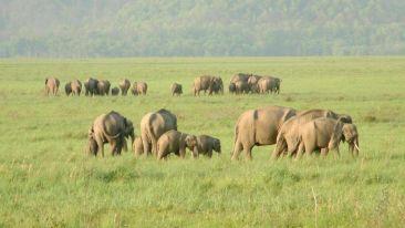 Aloha on the Ganges Rishikesh safari 2 rajaji national park haridwar
