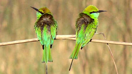 Tiger Camp Resort, Corbett Uttarakhand Bird Safari Corbett