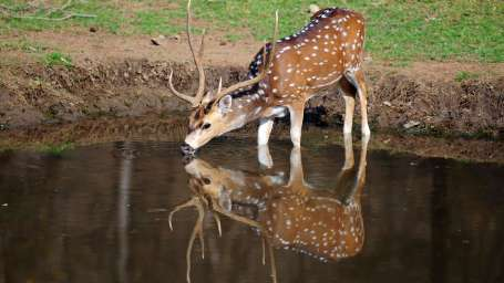 Sariska National Park at Umaid Lake Palace Hotel Kalakho Dausa Rajasthan