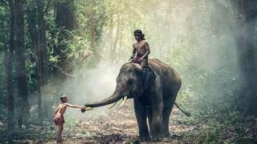 elephant-1822481 1920