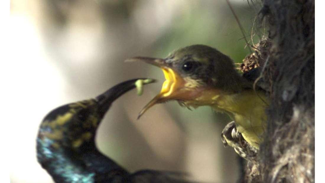 birds Shaheen Bagh Resort Best resorts in dehradun 14