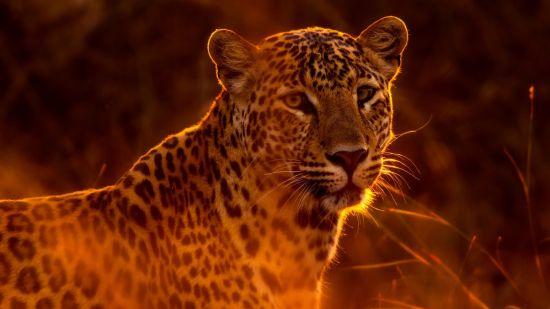 animal-animal-photography-beautiful-459169