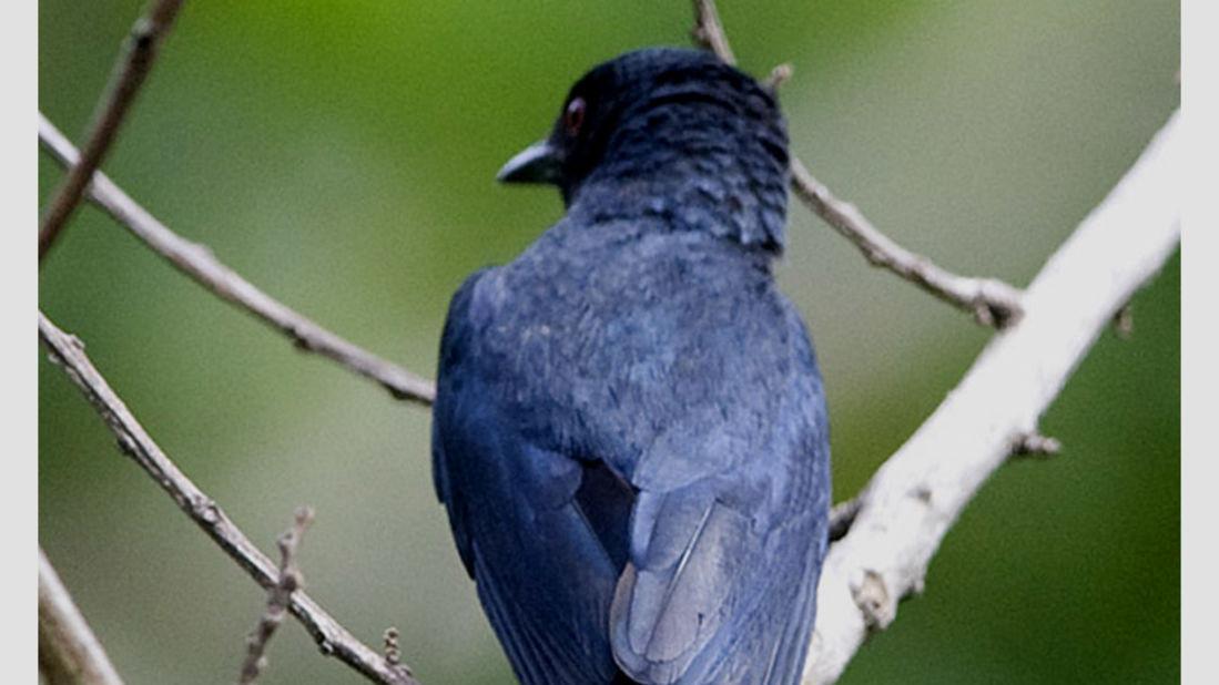 birds Shaheen Bagh Resort Best resorts in dehradun 29