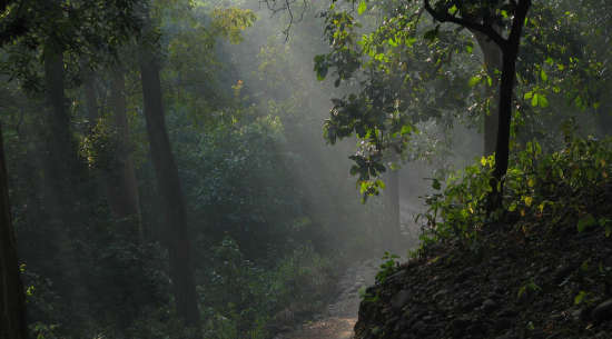 corbett national park the naini retreat nainital