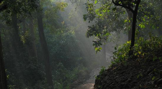 corbett national park the naini retreat nainital