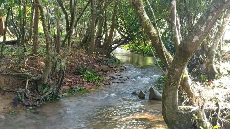 Rooms in Wayanad, Best Resorts in Wayanad, Nature Resorts in Vythiri 1