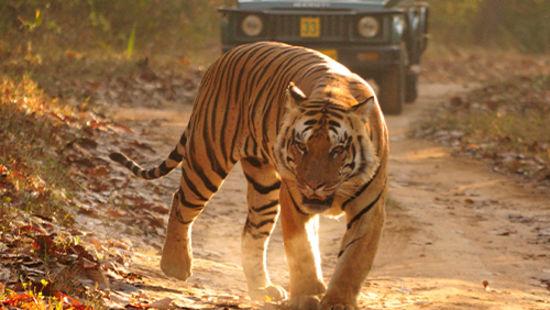 A visit to Jungle Safari in Jim Corbett