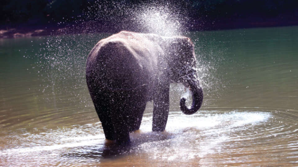 Elephant Picnic Niraamya Retreats Surya Samudra Kovalam Resort