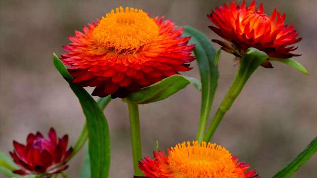 flowers Shaheen Bagh Resort Dehradun3