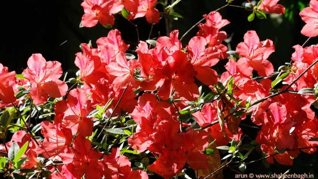 flowers_Shaheen Bagh Resort Dehradun_Dehradun Resorts1