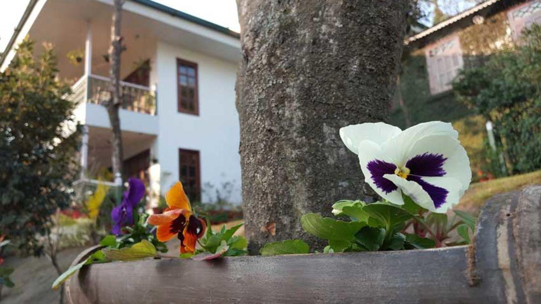 flowers_Shaheen Bagh Resort Dehradun_Dehradun Resorts15