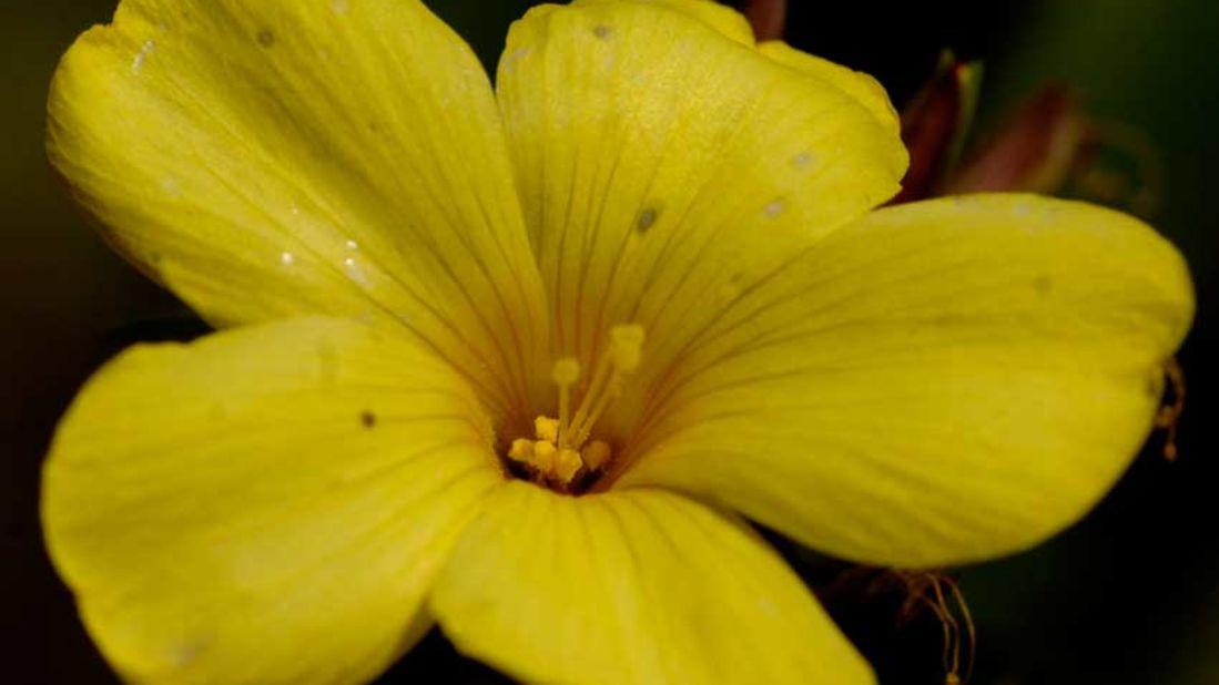 flowers_Shaheen Bagh Resort Dehradun_Dehradun Resorts21