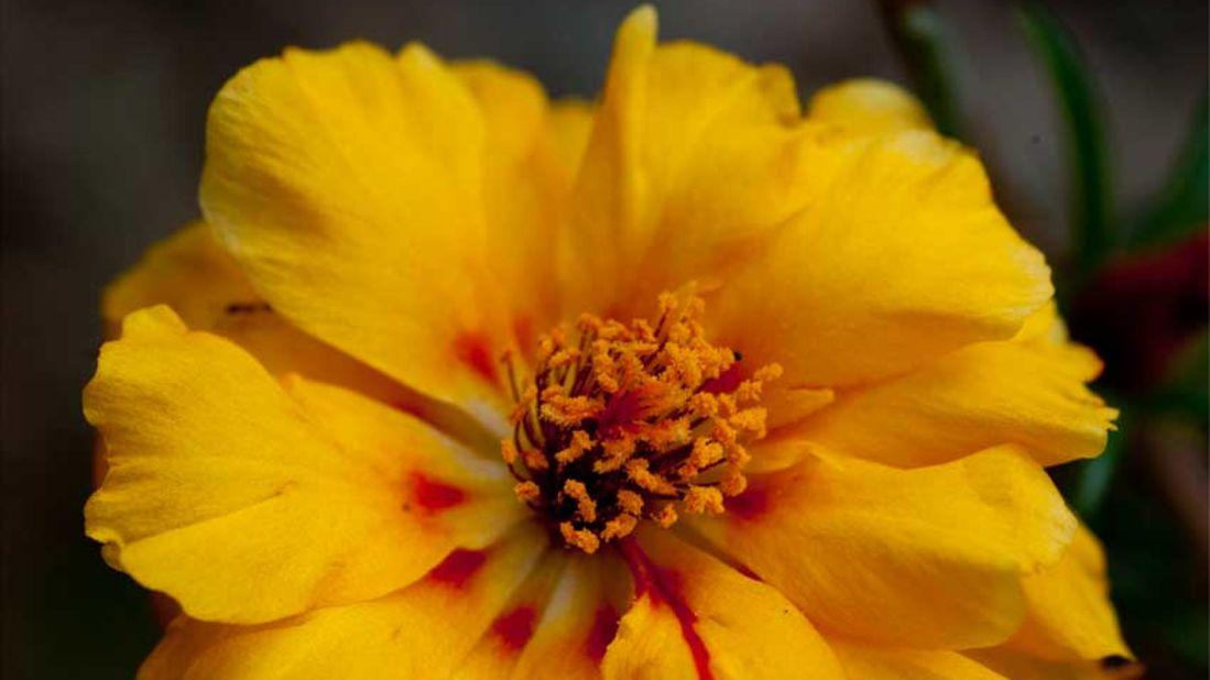 flowers_Shaheen Bagh Resort Dehradun_Dehradun Resorts9