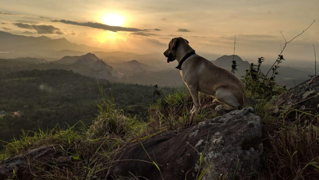 rowdy sunset