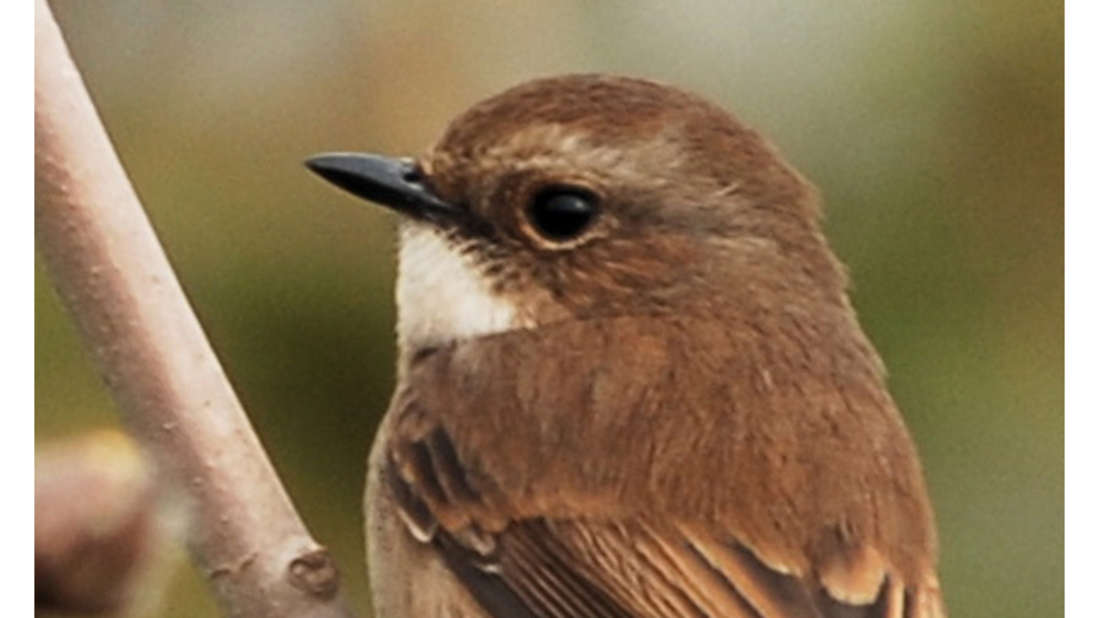 birds Shaheen Bagh Resort Best resorts in dehradun 20