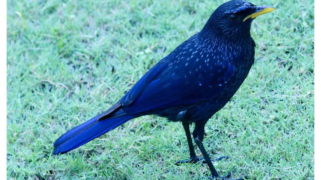 birds Shaheen Bagh Resort Best resorts in dehradun 32