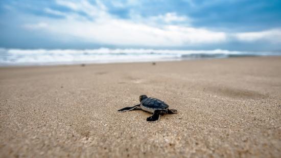 Places to visit in Konark, Best Konark beach resort