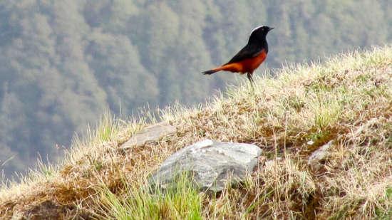 The Ramgarh Bungalows - 19th C, Kumaon Hills Kumaon Bird Watching