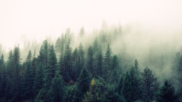 nature-forest-trees-fog-4827 2