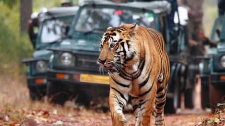 Tiger Camp Resort, Corbett Uttarakhand Corbett Jeep Safari