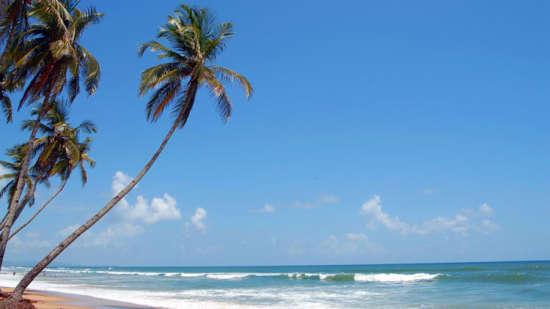 Lotus Beach Resort - Goa Goa Nearby Attractions Colva Beach Goa