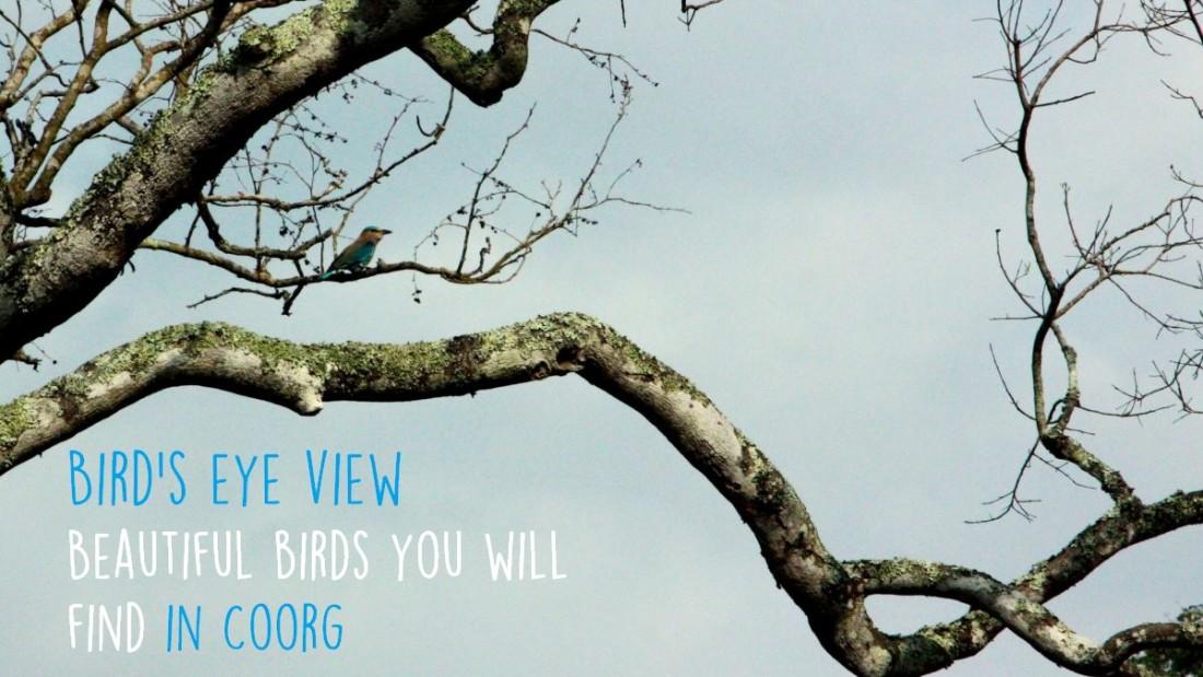 Birds In Coorg, Amanvana Resort Spa, Best resort in Coorg 4