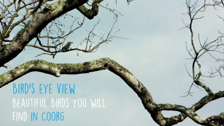 Amanvana Spa - Luxury Resort in Coorg Coorg birds - blog