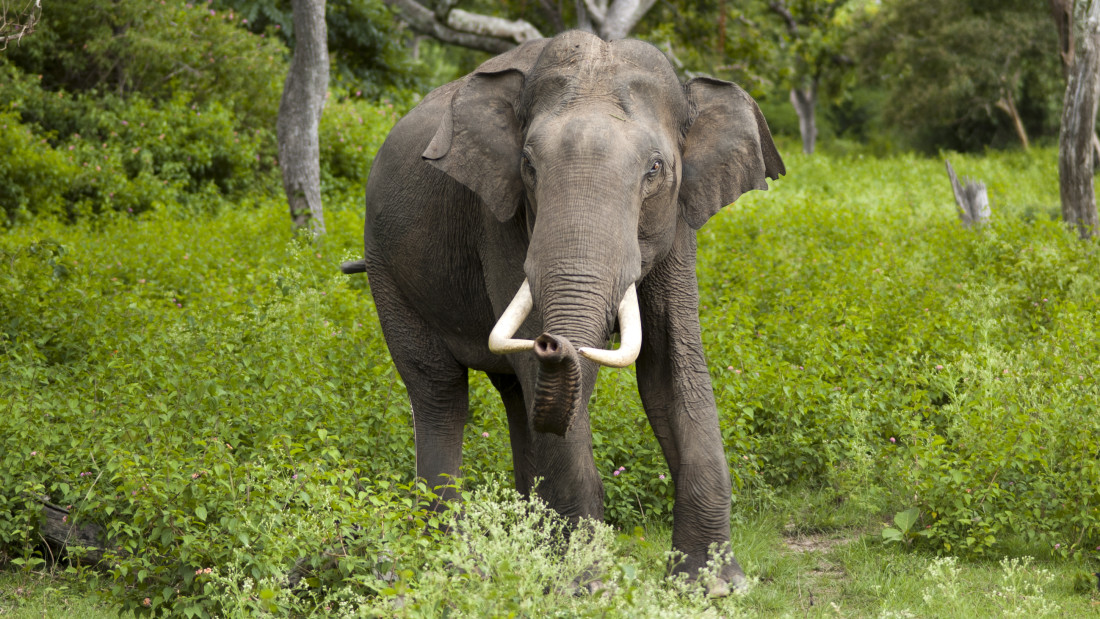 wildlife sanctuary Amanvana Resort Spa, places to visit in Coorg