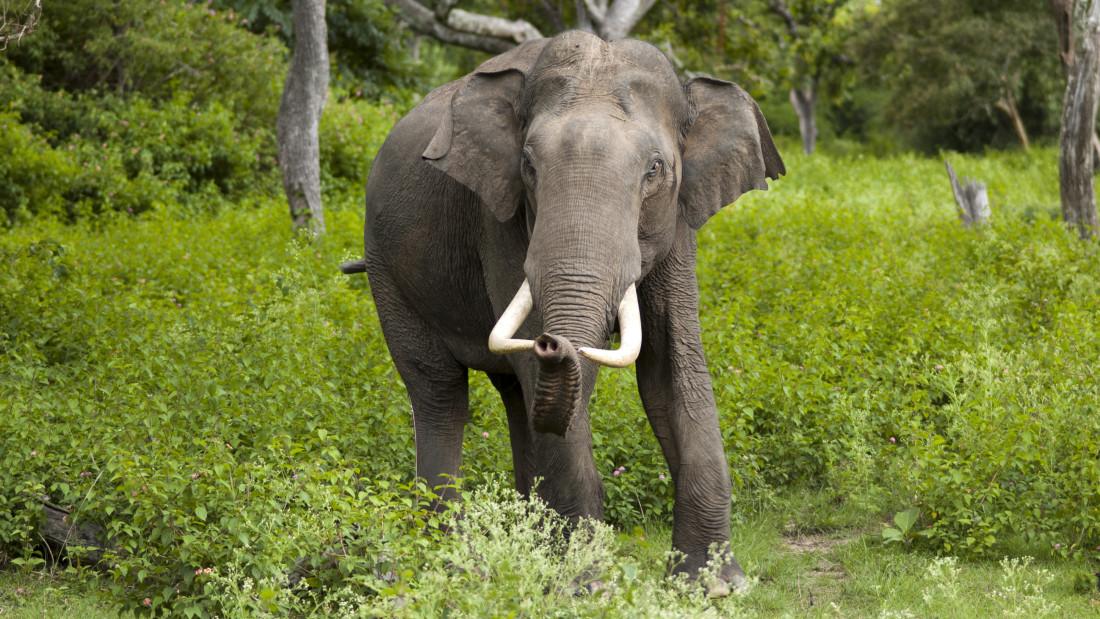 wildlife sanctuary Amanvana Resort Spa