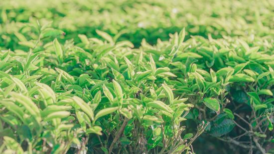 green-leafed-plant-1240961
