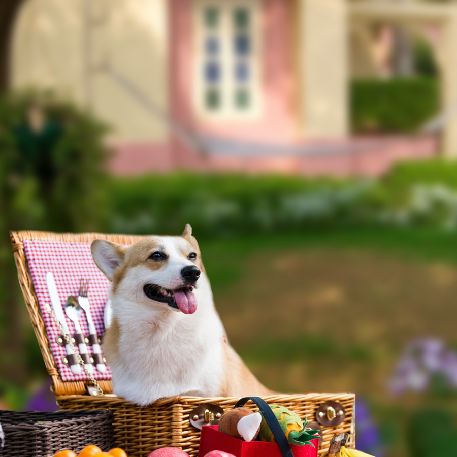 Pet-friendly 2x