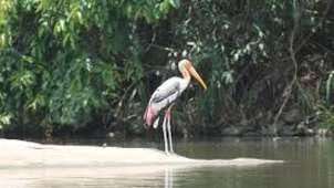 Hotel Southern Star Hassan Hassan Ranganthittu Bird Sanctuary