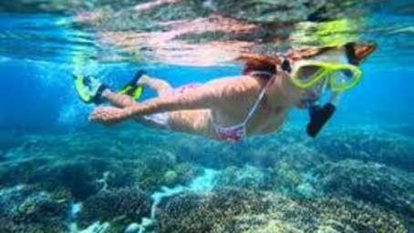 Ginger Tree Hotels, Goa  snorkeling